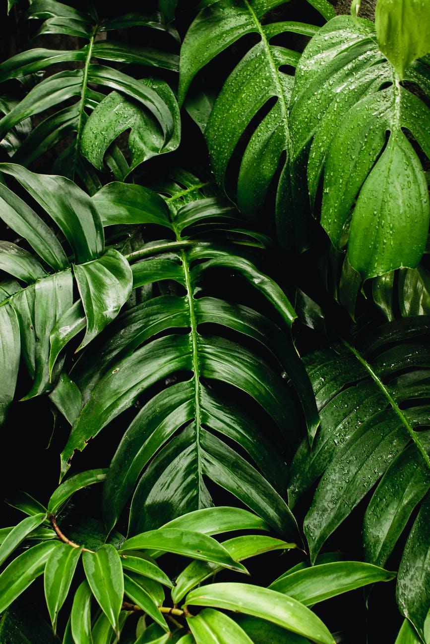 Semnificația culorilor / V – Verde
